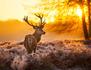 L'homme qui murmurait à l'oreille des cerfs