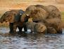 Eléphants du Kilimandjaro