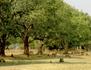 Afrique, les arbres de la vie