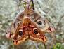 Enfants du soleil : les papillons