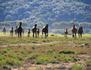 Les derniers cow-boys de Toscane